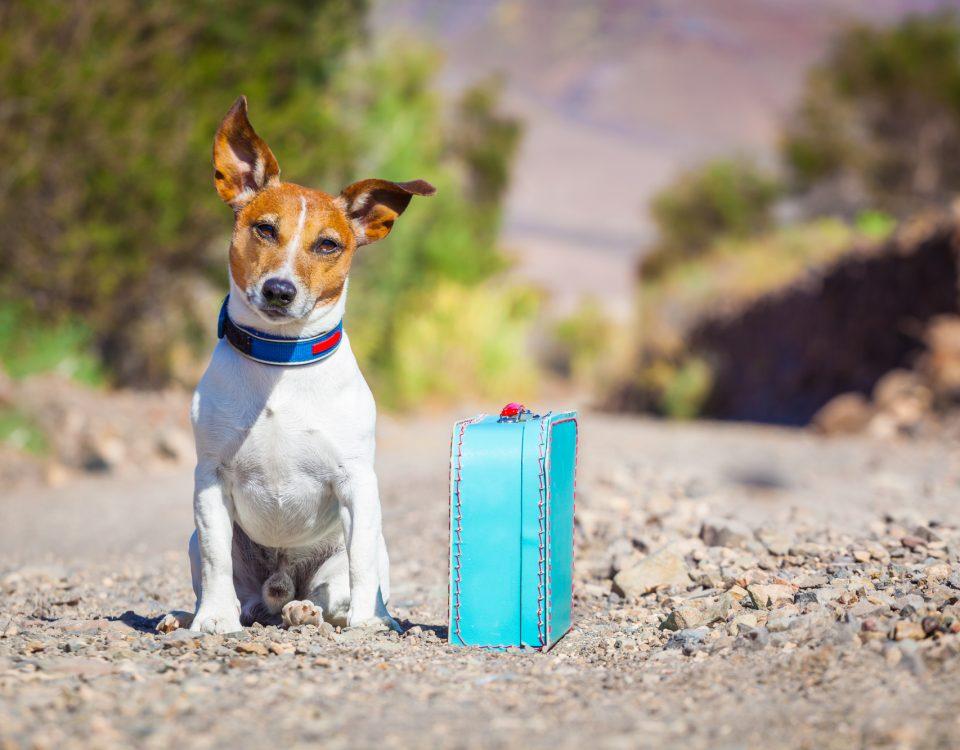 anti fugue chien